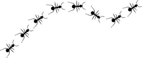 imagenes de hormigas negras hormigas bioqu 237 mica en la granja