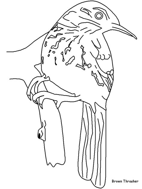 free brown thrasher coloring pages