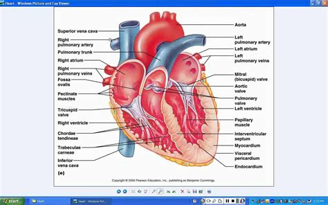 blood flow through the diagram step by step blood flow through the step by step 21 steps to