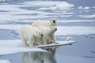 polar researchers urge governments to act now and