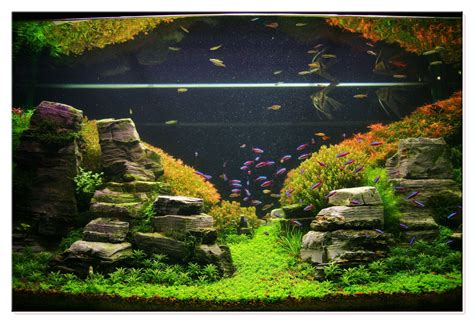 january 2011 aquascape of the month peruvian nights