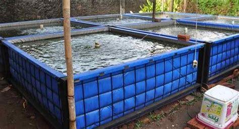 Obat Ton Nasa jual jual paket budidaya ikan nila di kolam terpal untuk