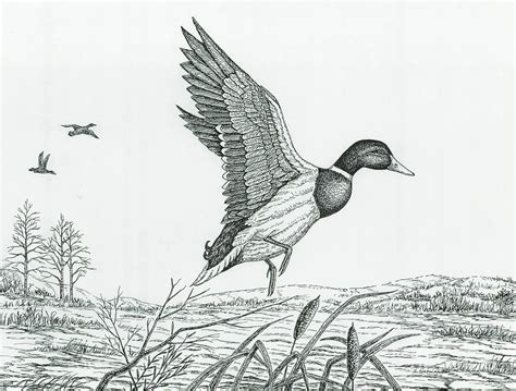 duck boat drawing duck taking flight painting by samuel showman