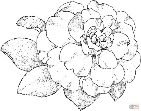 camellia flower coloring page camellia blossom coloring page free printable coloring pages