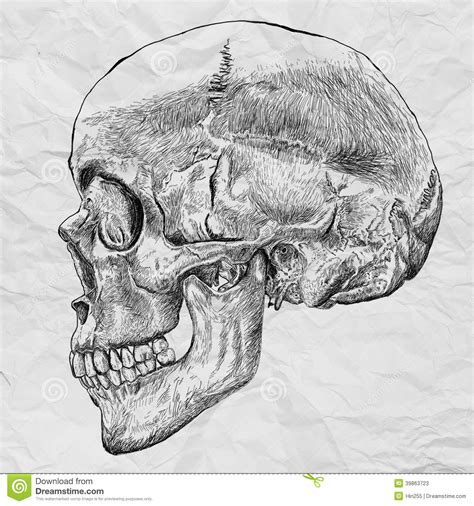 Human Skull Drawing Line On White Crumpled Paper Stock