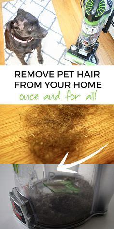 How To Remove Pet Hair From by Best Remove Pet Hair Ideas On Hair Removal