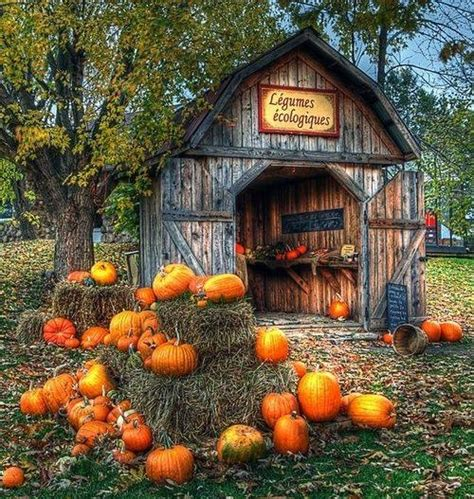 french pumpkin harvest pictures photos and images for