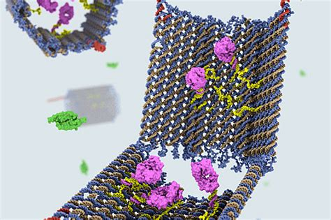 Dna Origami Software - nanorobots made out of dna seek and kill cancer cells