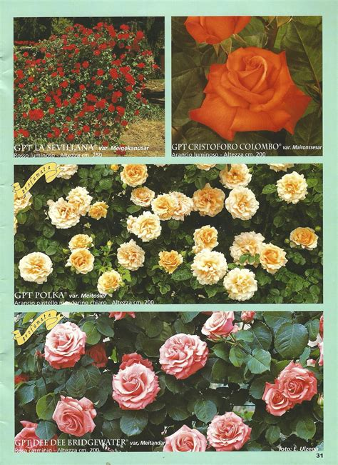 ste antiche fiori catalogo ricanti vivaio roggeri
