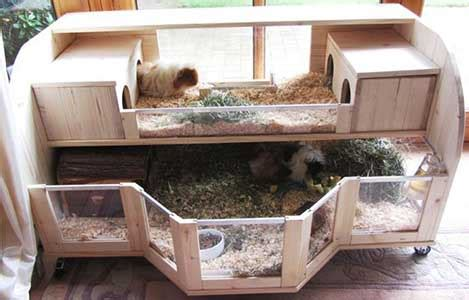 Rabbit Hutch Ramp Make Your Own Guinea Pig Cage Abyssinian Guinea Pig Tips