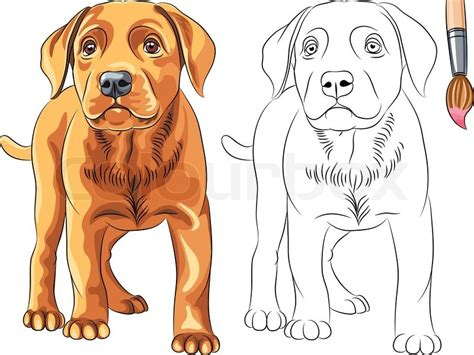 vector coloring book for children of funny serious puppy
