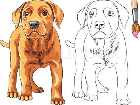 6164023 vector coloring book of red puppy dog labrador