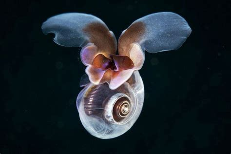 imagenes uñas decoradas raras raras y hermosas criaturas marinas im 225 genes taringa