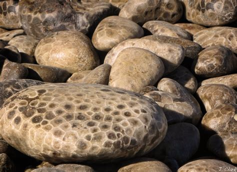 29 p is for petoskey stone making photos