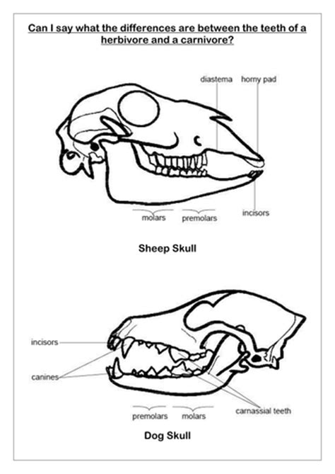 teeth diagram ks2 teeth and resources by c thulhu teaching