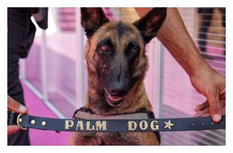 palm puppies cannes canines take top palm honors