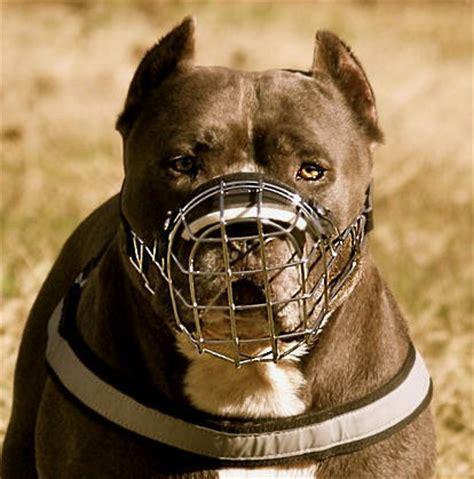 muzzle for pitbull pitbull muzzle wire muzzle cage muzzle basket muzzle for pitbull m9 1062