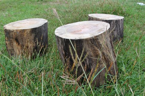 Saw Stools by How To Make A Stool From An Tree Trunk 7 Steps