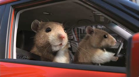 Kia Commercial Hamster Kia S Hamsters Scurry With Nielsen S Top Ad Award At