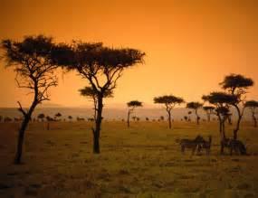 kenya or tanzania safari better 4 ways to plan a memorable tanzanian safari
