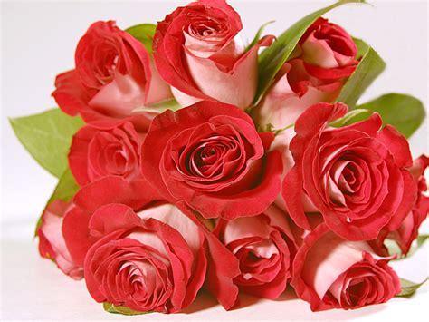 wallpaper rangkaian bunga mawar download gratis wallpapers bunga mawar gembala intelektual