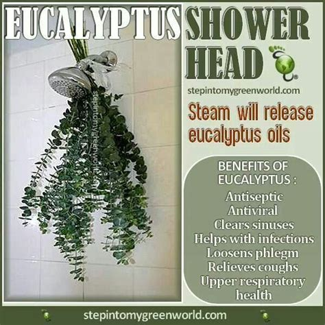 hang a bunch of eucalyptus from your shower to help