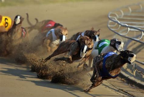 puppy race afc ban on racing