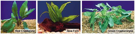 best low light aquarium plants freshwater planted aquariums low light plants for