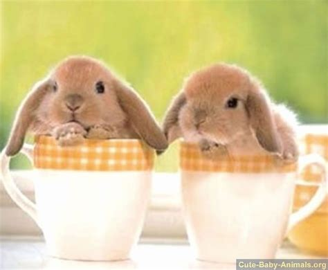Cute baby bunnies sitting in cups.   Just some baby