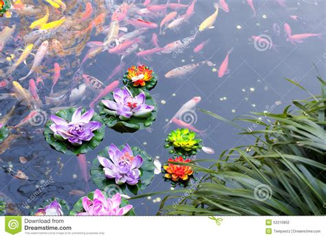 Emberly Top Z By Lotuz koi pond stock photo image of leaves reflecting lotus