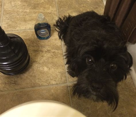 dish soap for fleas on puppies 2 uses for dish soap you probably didn t about selwa luke