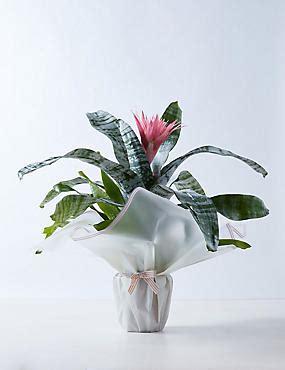 indoor plants house plants orchid pots ms