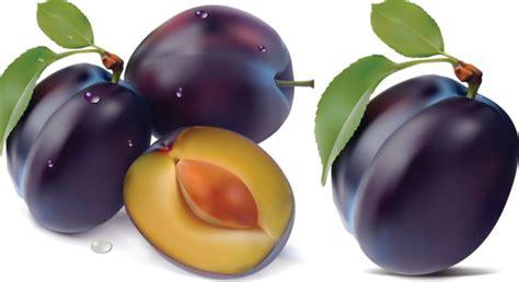 Dessin En Couleurs 224 Imprimer Nature Fruits Prune