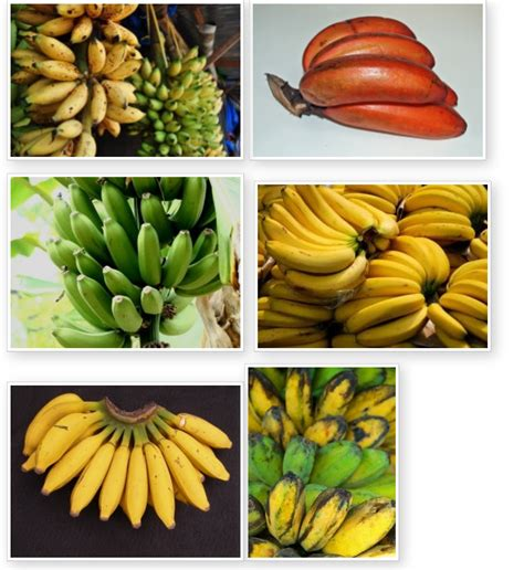 guide to six different types of bananas banana what s new philippines