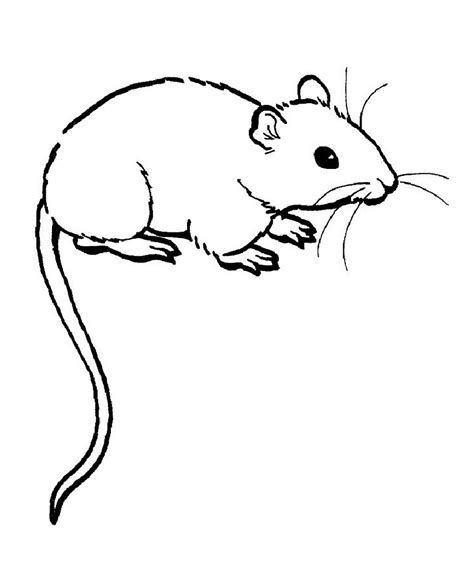 Free Printable Rat Coloring Pages For Kids Coloring Pages Of Black And White