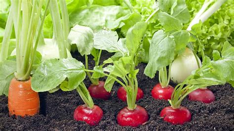 21 vegetable garden plants for