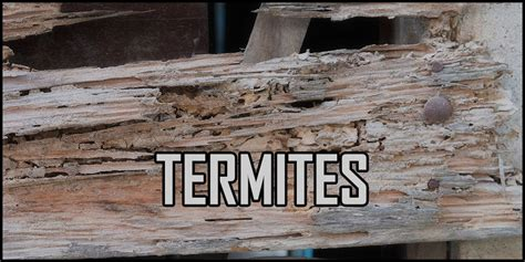 should i buy a house with termites buying a house with termites 28 images the cost of termite damage cure all pest