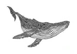 Shower Curtain Whale Humpback Drawing By Carol Lynne