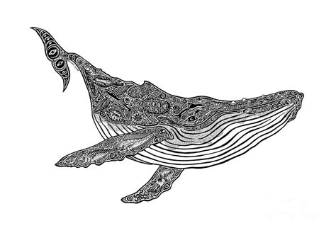 humpback drawing by carol lynne