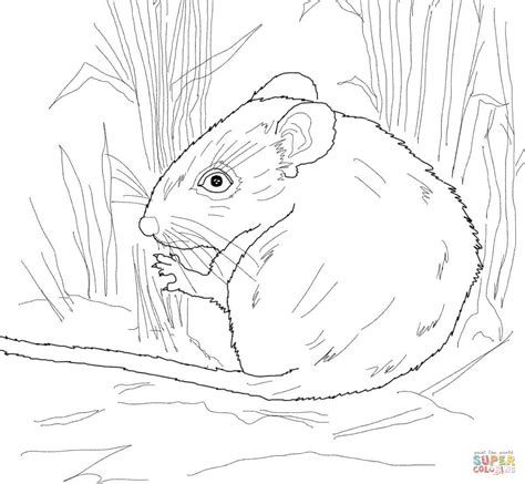 desert mouse coloring page desert mouse coloring online super coloring