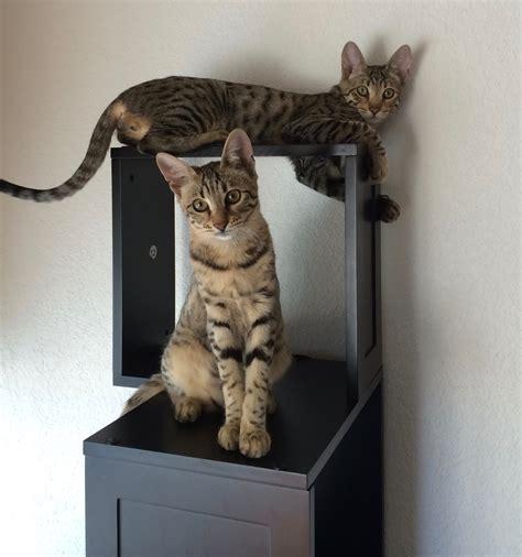 the sebastian modern cat tree sebastian modern cat tree review kitty loaf