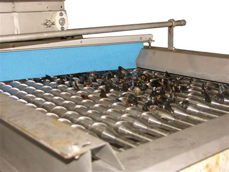 grading machine mussel grading machine conical rollers besnardbesnard