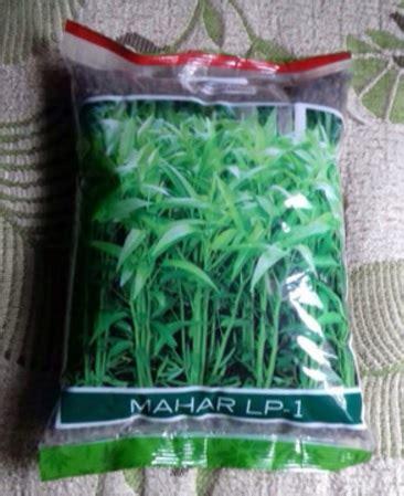 Benih Kangkung Cap Panah Merah benih panah merah kangkung mahar 1 kg jual tanaman