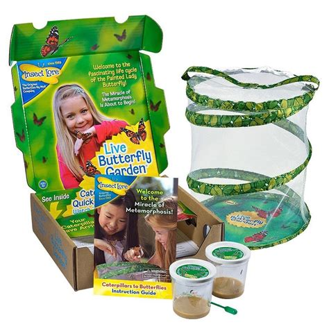 Butterfly Garden Kit by Caterpillar To Butterfly Kit For Toytico