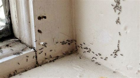 Ants In Pantry Get Rid Of by These Ants Are Driving Me Nuts