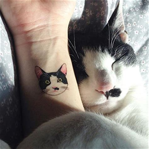 cat tattoo south korea cat tattoos are probably the cutest way to break the law