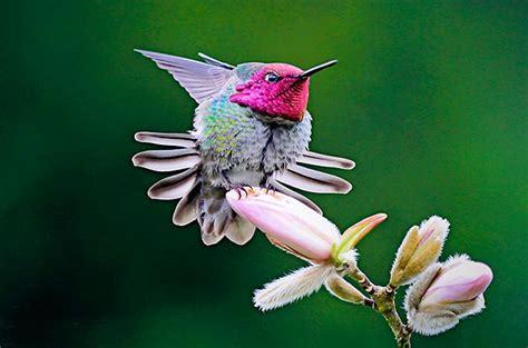 21 stunning hummingbird photos you need to see birds and