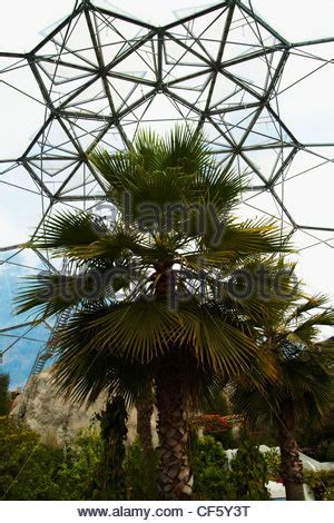 palms throughout the world plastic palm tree stock photos plastic palm tree stock images page 3 alamy