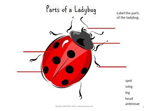 ladybug diagram image gallery ladybug diagram