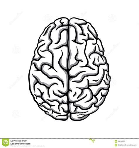 White Brain black white human brain illustration stock vector